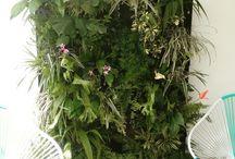 Jardines de Casa Violy / Jardines Verticales