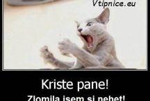 vtipné kočky