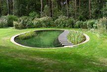 Pond, pools and ideas