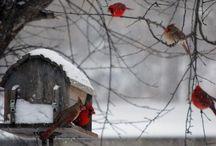 Tél/Winter
