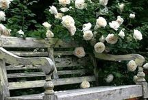 Ruusut, Roses