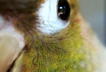 green cheek conures / just because!