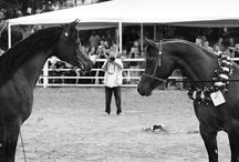 .Passion for Arabian Horses ♥