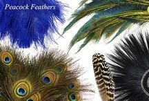 PEACOCK FEATHERS / Several styles of natural and dyed peacock feathers, peacock flue and plumage available at www.featherplace.com
