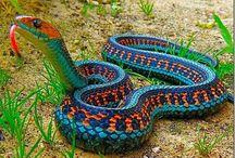 Węże żmije....