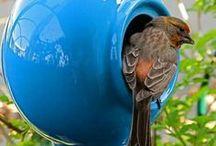 Casette uccellini selvatici