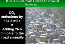 Beef Production and Agriculture Advocacy / by Kelli Kolar