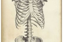 Anatomy