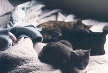 (cats)