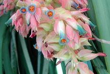 Rare Flowers / Plants / by Dewi Dharma