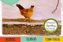 Spanish Accents and Punctuation   Los acentos y la puntuación en español