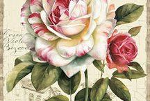 Just Roses / by Elsie FitzPatrick