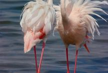 Birds! ❤️