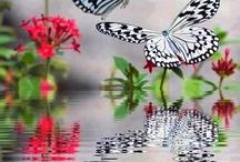 viber gyonyoru pillango