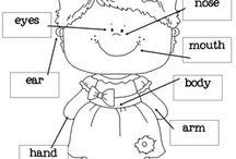 English - body parts