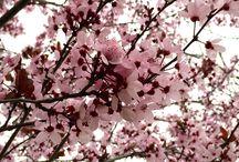Flores / Flores de todo tipo y temporada