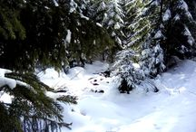 Székelyvarság / Székelyvarság Település, Románia Terület: 76,69 km² Időjárás: -4 °C, szélirány: É, sebessége: 3 km/óra, páratartalom: 90% Népesség: 1 572 (2011.)