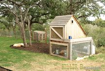 Chicken Coops AKA The Hen House! / by Patricia Brown Crafton