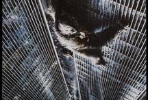 7 A / Filmes + séries / by Franklin Stein