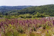 Paysages en Haut-Limousin