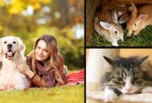Pets / A pet is an animal with which people usually live together as friends. Generally most pets belong to a small number of species, often preferred for their specific appearance or behaviour.