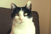 ¡Somos Gatos! / Cooper, Cabo, Martes y Billy son los gatos de Eva. O Eva es la humana de Cooper, Cabo, Martes, Billy. Sesudos y soprendentes.