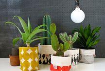 flores y cactus