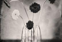 Flower / by hy Lau