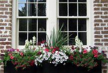 Winter Window Box Project :) / by Nancy Mornan
