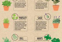 πληροφορίες για φυτά