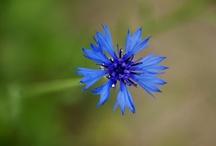 I love Weeds / Chwasty są piekne i tutaj to udowadniamy.