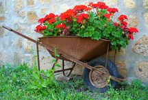 Wheelbarrow / by Judy Ricard
