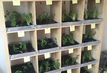 Plants and veggies