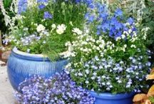 Love the blue pots