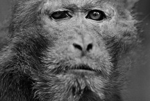 Monkey / by Ludovic Piquet