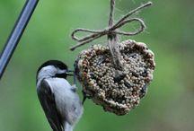 Птицы - Birds / Разные и прекраснные
