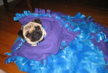 Pugs in a Blanket / Pugs are such cuddly and cozy creatures!