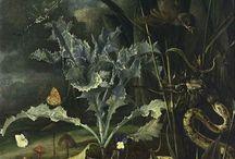 Otto Marseus Van Schriek - 17th C