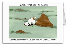 Jack russels