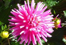 ViewBug.com / Photography
