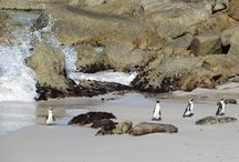 Penguins / All the places where I have seen Penguins