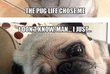 Pugs ♡