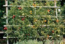 Garden edibles