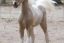Horses - жеребята