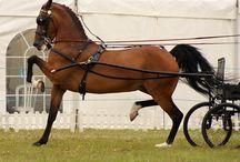 Horses-Driving