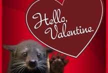 UC Valentines / by UC Alumni