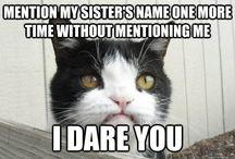 Pokey (Grumpy Cats brother)