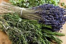 herbs/herbalism / by Julie Wemken