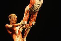 BODY WORLDS / Il vero mondo del corpo umano