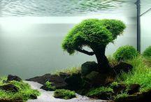 idées aquarium